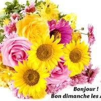 Bonjour ! Bon dimanche les... Share Pictures, Animated Gifs, Jolie Photo, Flower Photos, Beautiful Flowers, Floral Wreath, Images, Clip Art, Wreaths