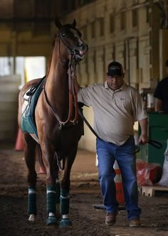 After a nice work out California Chrome going back to the stable.