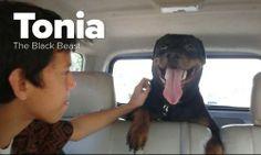 Tonia Tha Black Beast