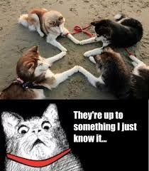 Image result for cat and dog memes
