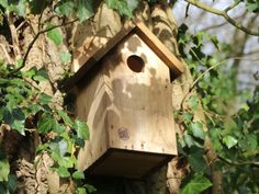 Nistkasten, Vogelhaus, Bruthilfe Bird, Outdoor Decor, Home Decor, Kinds Of Birds, Enemies, First Aid, Timber Wood, Decoration Home, Room Decor