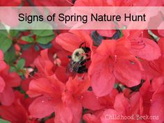 Signs Of Spring Nature Hunt- Search for the signs and soak in the season with a free printable notebooking page to record findings.