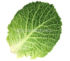 Leaf of Ripe Savoy Cabbage Savoy Cabbage, Cabbage Leaves, Acorn, Pastel, Vegetables, Trees, Templates, Leaves, Cake