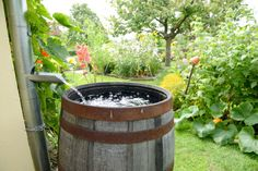 Rain barrel for water conservation