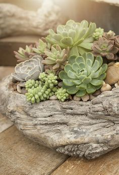 Create a beach house vibe with a succulent driftwood planter a little west coast garden on the patio. Succulent Planter Diy, Succulent Landscaping, Succulent Gardening, Succulent Arrangements, Container Gardening, Planter Garden, Cacti Garden, Indoor Gardening, Succulents In Containers