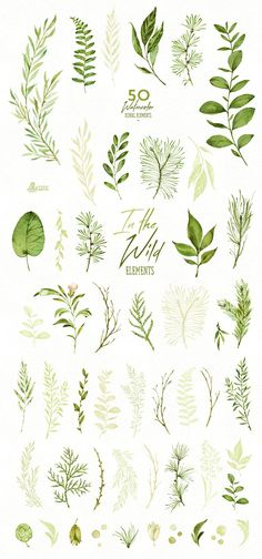 In the Wild. Forest Collection Watercolor hand painted leaves PNg graphic resources download