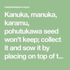 Kanuka, manuka, karamu, pohutukawa seed won't keep; collect it and sow it by placing on top of the soil (don't bury it) and water it in using a watering-can with a fine rose.