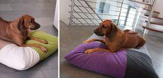 Cuscino cane design Divan Quattro