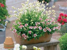 The most beautiful ornamental grasses for pots - There are many good reasons to plant ornamental grasses: with their beautiful growth shape, colorfu - Balcony Flowers, Balcony Plants, Patio Plants, Landscaping Plants, Grasses For Pots, Flower Pot Design, Backyard Garden Design, Diy Garden Projects, Plantar