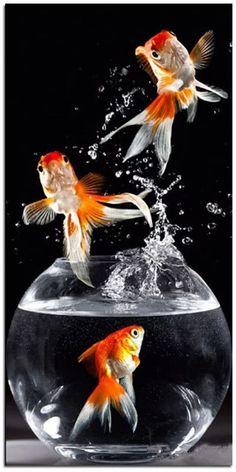 Gold Fish Wallpapers on WallpaperPlay Goldfish Wallpaper, Animal Wallpaper, Wallpaper Hd Samsung, Golden Fish, Motifs Animal, Fish Drawings, Mosaic Diy, Beautiful Fish, Cross Paintings