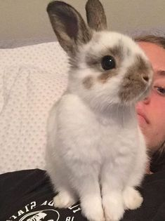 /r/rabbits is an open community where users can learn, share cute pictures, or ask questions about rabbits. Please note we are a *pet rabbit*. Cute Baby Bunnies, Funny Bunnies, Cute Baby Animals, Animals And Pets, Fluffy Bunny, Hamsters, Dwarf Bunnies, Beautiful Rabbit, Chica Anime Manga