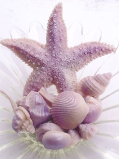 SHELL SOAP Summer Shimmering Shells and by thecharmingfrog on Etsy, $10.00