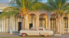 Cienfuegos_palm_trees
