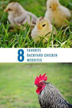 #chicken #chickens #farm #farmlife #country #countrylife #chick #heritageacresmarket #chickensofinstagram #backyardchickens #fresheggs #countryliving #backyardpoultry #pueblocolorado #puebloco #colorado