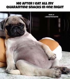 Quick simple and guaranteed to brighten your Valentine's day! Good Father Quotes, Good Good Father, Funny Animals, Cute Animals, Cute Pugs, Archie, First Night, French Bulldog, Funny Memes