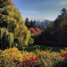 View from the Portland Test Rose Garden.
