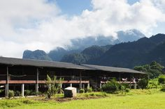 Learn what to expect when visiting an Iban longhouse in Sarawak, Borneo. See tips, etiquette, what gifts to bring, and how to book an authentic longhouse stay without a touristic experience.