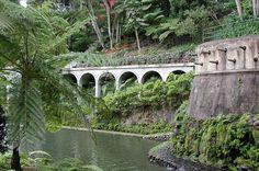 Jardim Tropical Garden Monte Palace - Flip - Picasa Web Albums