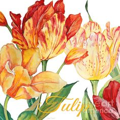 I uploaded new artwork to plout-gallery.artistwebsites.com! - 'Tulip-jp2583' - http://plout-gallery.artistwebsites.com/featured/tulip-jp2583-jean-plout.html