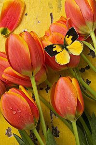 Beautiful Photograph - Dogface Butterfly And Tulips by Garry Gay