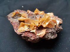 60 × 40 × level of limonite matrix filled with yellow & orange translucent wulfenite xx. Shops, Etsy Shop, Desserts, Food, Minerals, Tents, Meal, Deserts, Essen