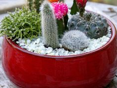 Create a sleek, modern, and drought-tolerant cactus dish garden for your tabletop. Small Cactus, Dish Garden, Diy Network, Drought Tolerant, Garden Projects, Hgtv, Dishes, Cacti, Create