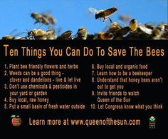 What you can do to help save honeybees!