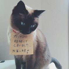 * * * ジャム、見せしめの刑。その2。 * * 悪気はなかったんです。。 でもそこにブランケットがあったから…。 * * これで2回目の粗相。。 対策としてトイレを増設しました。 * * #ねこ #ねこ部 #ねこすたぐらむ #ねこのきもち #ねこ好きさんと繋がりたい #ねこ好き #ねこら部 #ねこ日記 #ねこ好き #猫 #保護猫 #猫好きさんと繋がりたい #愛猫 #見せしめの刑 #くるみとジャム #cat #cats #catsagram #catslover #catstagram #catlover #反省 #反省中