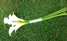 Simple calla lily bouquet
