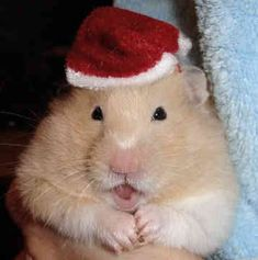 A HAMSTER!