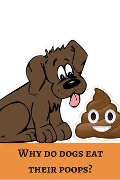 We would feed premium foods to dogs. Still they eat their poops. Reveal the secret of healing the habit! http://dogbabe.com/why-do-dogs-eat-their-poops/