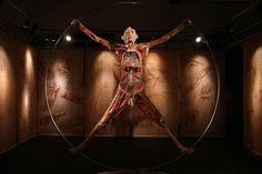 Mostra apresenta 'corpos reais' em Lisboa (foto:EPA)