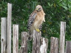 DeSoto National Park - Bradenton, FL