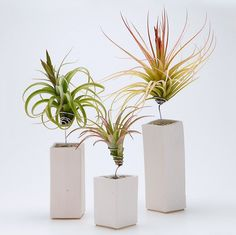 Fancy - AirplantVessel Ceramic