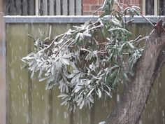 A crucial part of winterizing is to protect half hardy and subtropical plants. But what happens when they become frozen? Learn what to do in this article.
