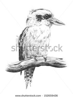 Find Hand Drawn Sketch Australian Kingfisher Laughing stock images in HD and millions of other royalty-free stock photos, illustrations and vectors in the Shutterstock collection. Pencil Drawing Inspiration, Pencil Sketch Drawing, Sketch Painting, Drawing Ideas, Pencil Drawings Of Animals, Animal Sketches, Bird Drawings, Pyrography Patterns, Pen And Wash