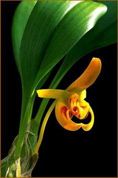 Flowera Story