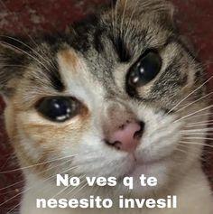 Mcr Memes, Stupid Memes, Funny Memes, Meme Pictures, Reaction Pictures, Romantic Humor, Funny Spanish Memes, Meme Stickers, Cute Love Memes