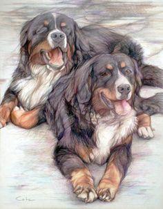 Bernese mountain dog couple Original Colored by PETARTPortraits, $25.00