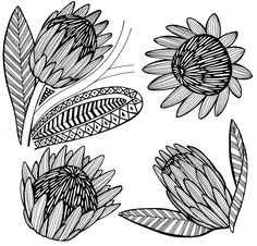 Prentresultaat vir protea line drawings Botanical Drawings, Drawings, Flower Art, Floral Art, Protea Art, Art, Lino Art, Flower Illustration, Flower Stencil Patterns
