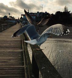 #Zinnowitz #usedom #balticsea #Ostsee #inselusedom
