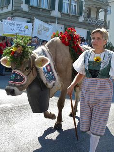 Swiss cow. All dressed for the festival.
