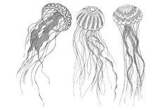 Kleurplaat -Tekeningen - Sjabloon - Dessin - Patronen: Dieren *Colouring Pict.-Template-Pattern: Animal ~Kwallen *Jellyfish~