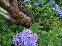 Schieflage im Garten http://www.garteninspektor.com/blog/schieflage-im-garten