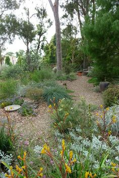 Path and long garden bed with angophera