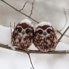 Two little russian owls Double tap if you like that!...       Folow Us Discover Your Planet!      .... Credits: Irina Scherbakova #backpacker#naturelover#photograph#vacation#instatravel#traveltheworld#tourism#tourist#gopro#backpacking#instapassport#resorts#sport#igloo#travelling#resort#mountain#cold#traveller#fun#exploreeverything#wanderlust#swimming#summer #winter#travelphoto#holidays#romantic#lake