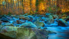 """** Autumn Glow ** - """"You can't hide your true colours as you approach the autumn…"""