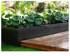 Image result for tropical garden auckland