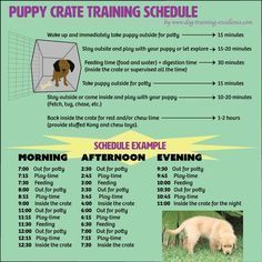 Most current Photo Free printable puppy crate training schedule! The best solution to potty train y. Ideas How Are Pets Given Fundamental Obedience Training ? Puppy Potty Training Tips, Training Your Dog, Kennel Training A Puppy, Puppy Crate Training Schedule, Training Collar, Labrador Puppy Training, Training Plan, Crate Training Puppies, House Training A Puppy