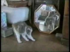 America's Funniest Home Videos - Funny Cats